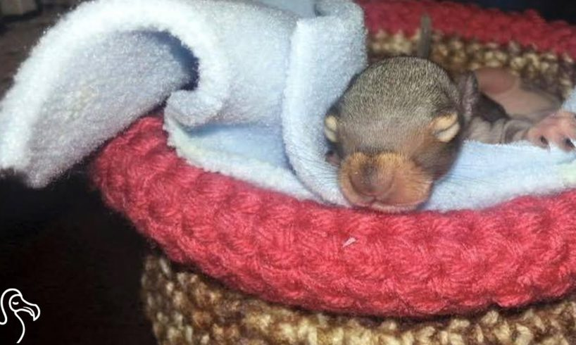 Rescued Baby Animals Are Sleeping In Knitted Nests
