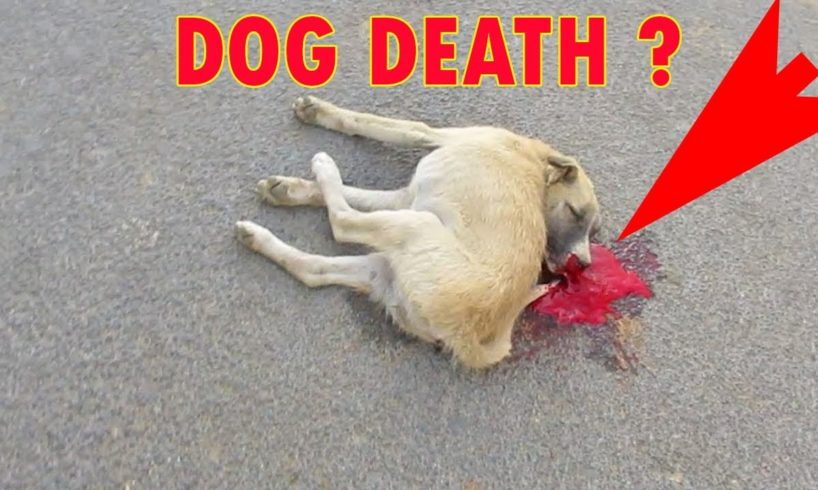 Rescued dogs with cars near death and resurgence Dog Rescue Stories Tl channel #7 #6