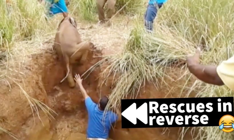 Rescues in Reverse are Hilariously Cruel - Try Not to Laugh ???