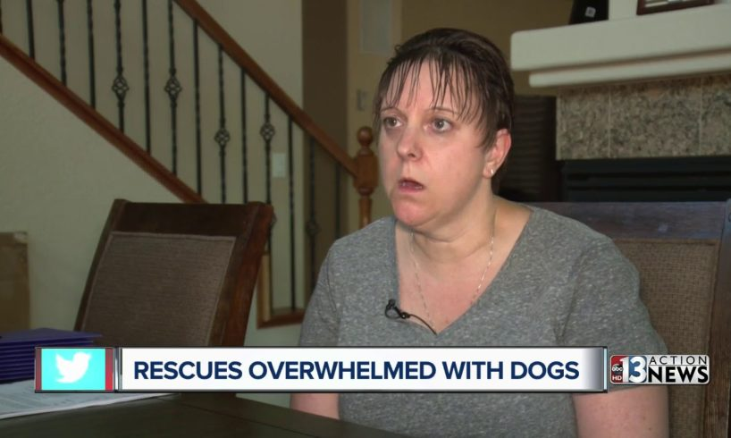 Rescues overwhelmed with dogs