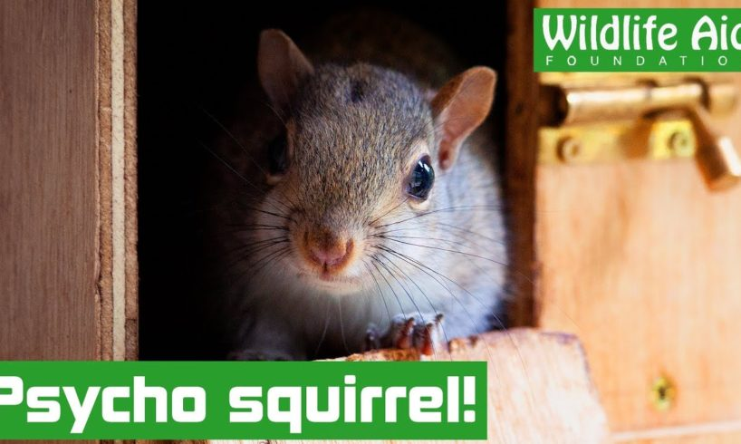 SQUIRREL runs riot in the house!