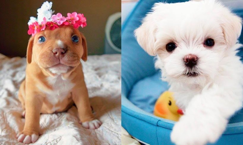 The Cutest Puppies Video Compilation - Cute Puppies Ever