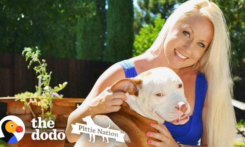 The Story of How a Pit Bull Changed His Mom's Life Forever   The Dodo Pittie Nation