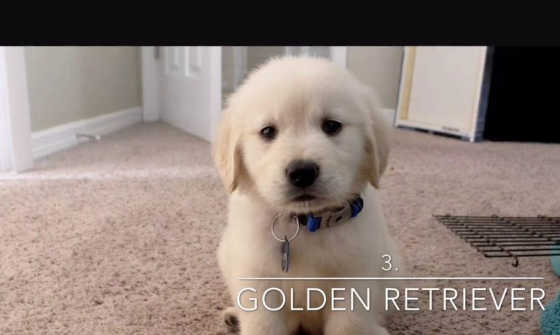 Top 5 Cutest Puppies