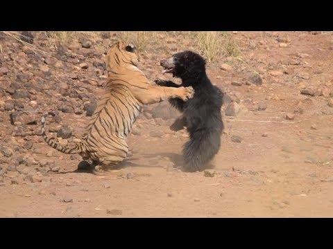 True Power Of Nature: Animal Fights