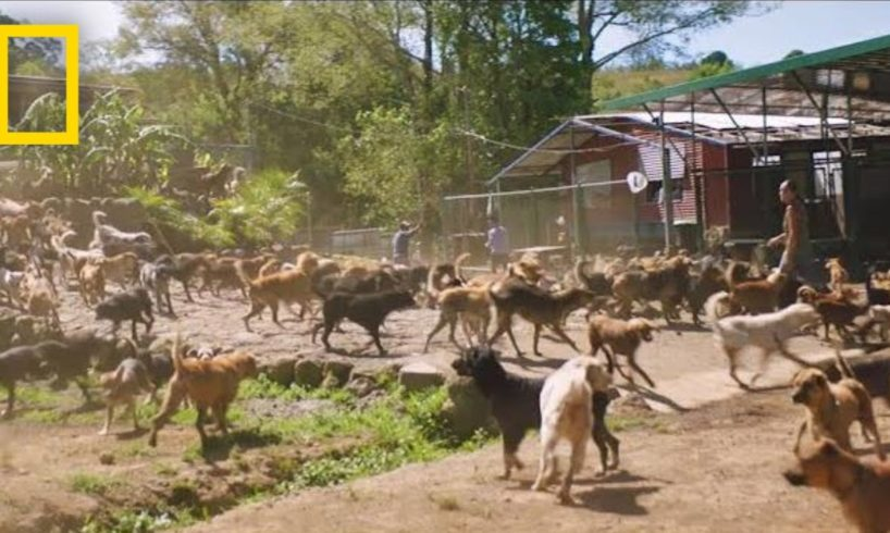 Watch Thousands of Dogs Run Free in This Magical Sanctuary   Short Film Showcase