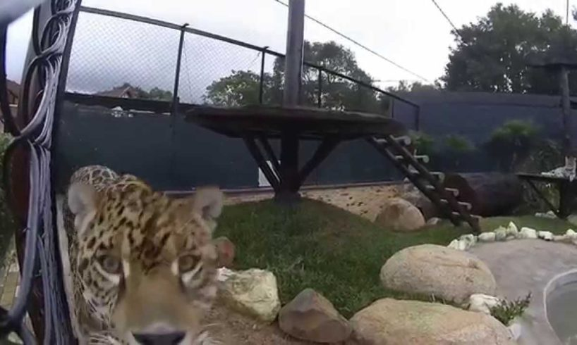 Watch the reaction of different animals on a camera -compilation