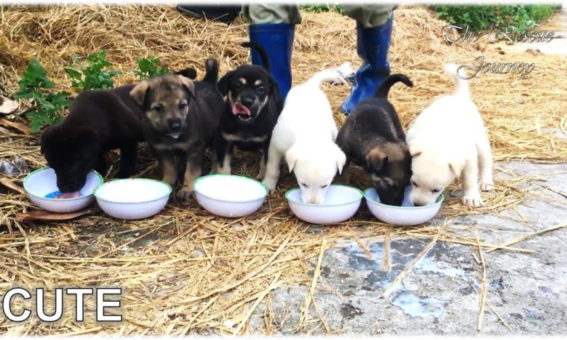We Found 6 Cute Puppies In The Garden And They are 6 Cutest Dogs In The World