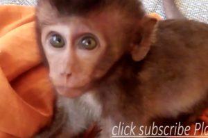 baby monkey Lori sleep playing with baby cat. Animals SR Kh.
