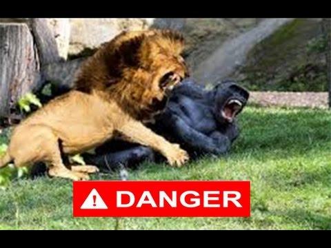 Top 10 Animal Fight  يجب مشاهدته