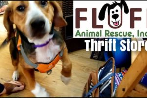 Fluff Animal Rescue Thrift Store