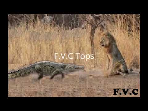 ᴴᴰ Wild Animals Fight To The Death ? Animal attacks 2018 Animals Fights ⭐ Animals attacks 2017