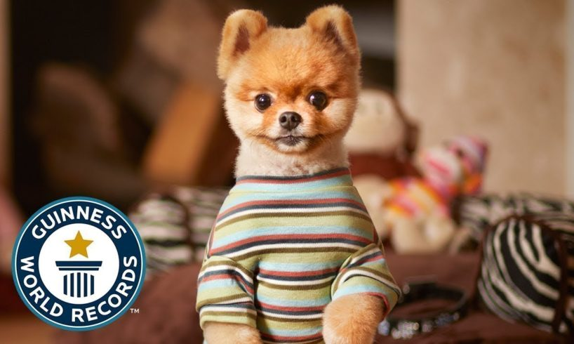 10 animals with guinness world records 😍