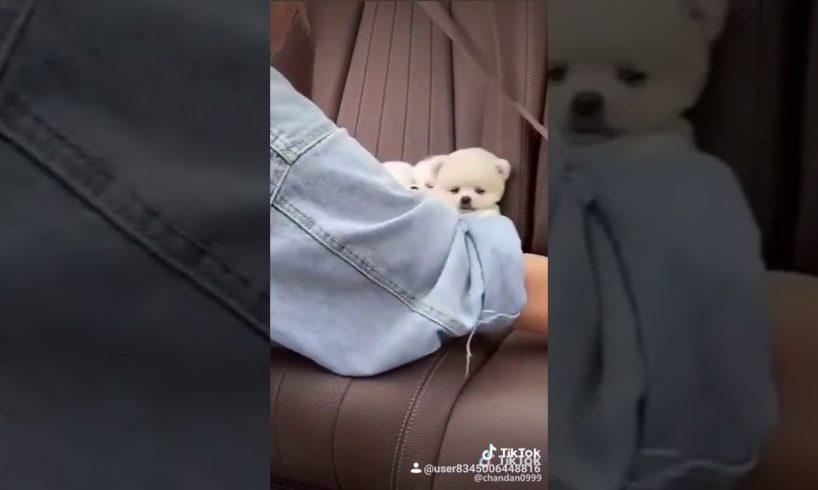 Cute puppies?