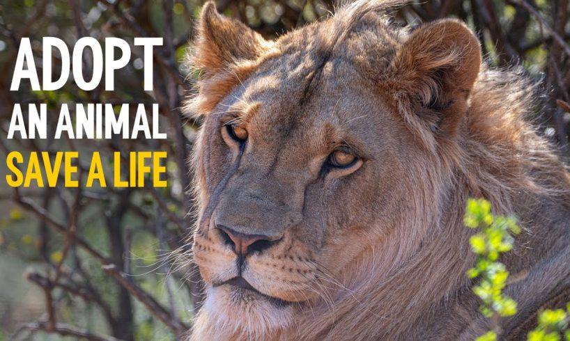 Adopt an animal. Save a life.