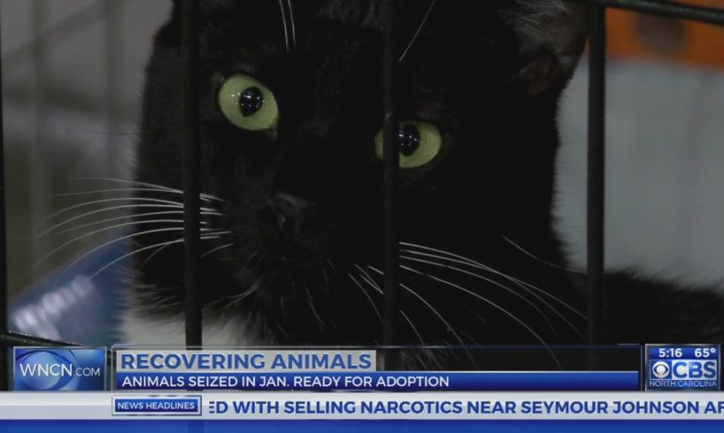 Adoption of nearly 700 rescued animals to start later this month in Sanford
