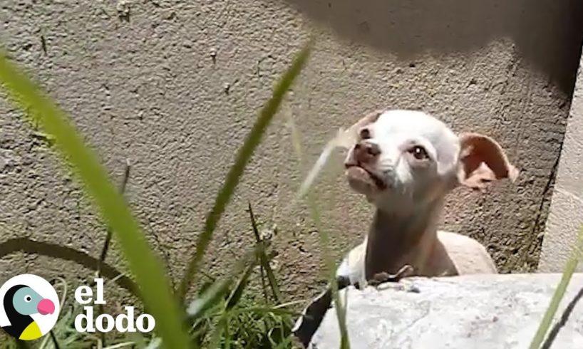 Agresiva y aterrada perrita es encontrada bajo un puente | El Dodo