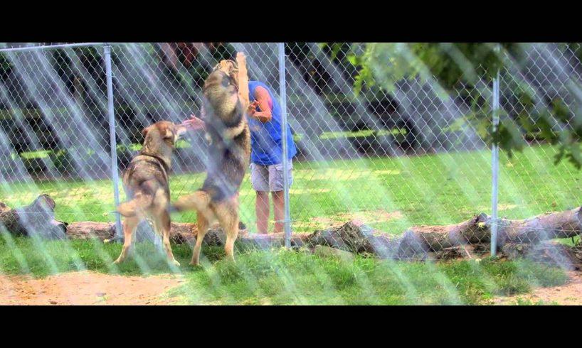 Aloha Safari Zoo - Rescued Exotic Animals