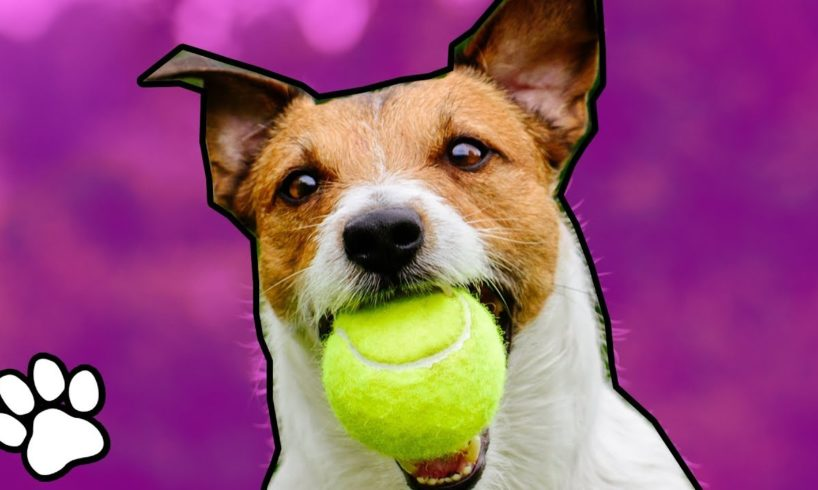 Animals Playing Sports   Trained Pet Videos   That Pet Life