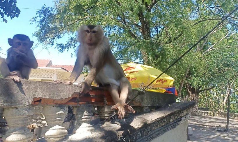Baby Monkey Playing - monkey animals monkey doo funny monkey videos monkey banana monkeys monkeyboo