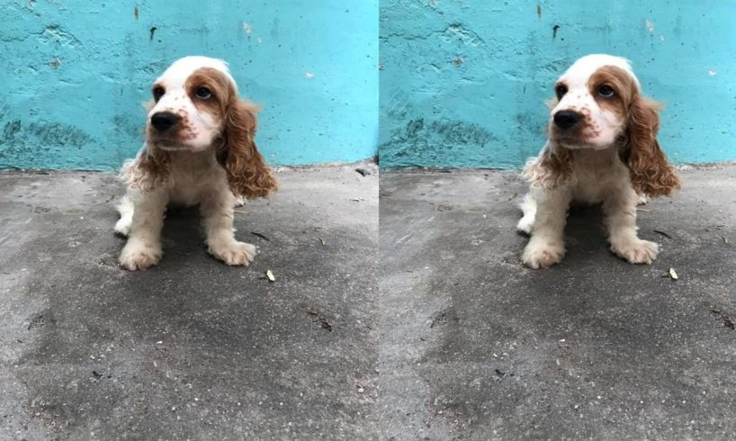 Beautiful puppies in new stock Hey hey Cute Puppies Barking And Talking