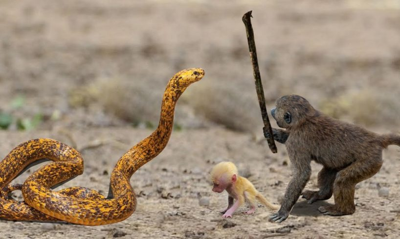Best Moments Wild Animals Fight Monkey vs Snake and Leopard