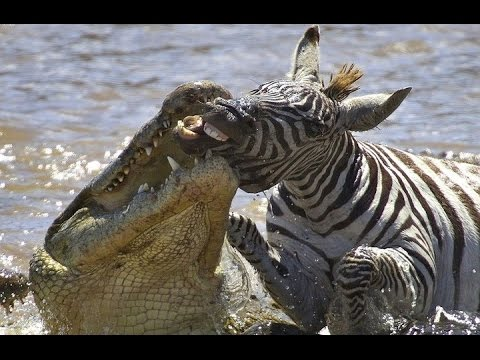 Best Of Animal Fights 2016 | Animal Kingdom
