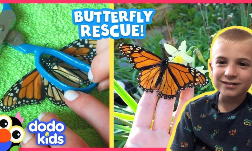 """Butterfly Gets Coolest """"Surgery"""" To Fix His Wing 