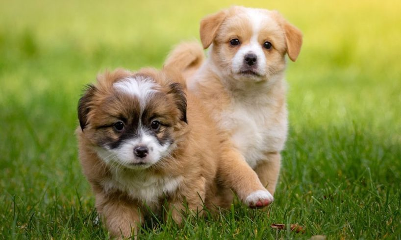 CUTE DOG PLAY VIDEOS COMPILATIONS ! CUTE PUPPIES AND DOGS