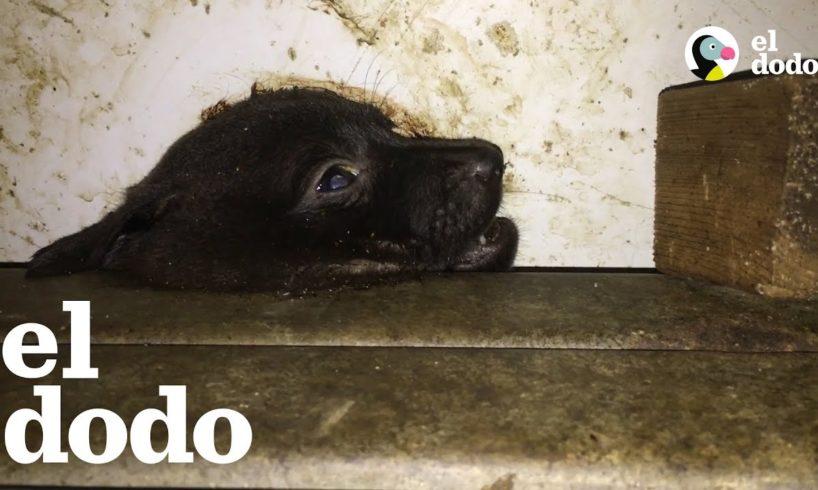 Cachorrito perdido se reúne con su familia después de una tormenta   El Dodo