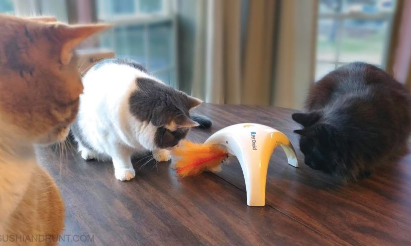 Cats Play with Pet Droid Feather Spinner Interactive Cat Toy
