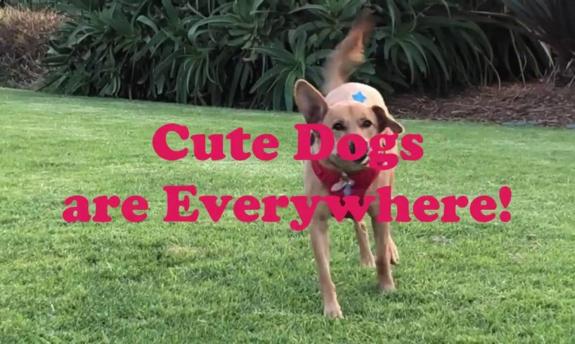 ♥Cute Puppies Doing Cute Things 2019♥ #1 Cutest Dogs