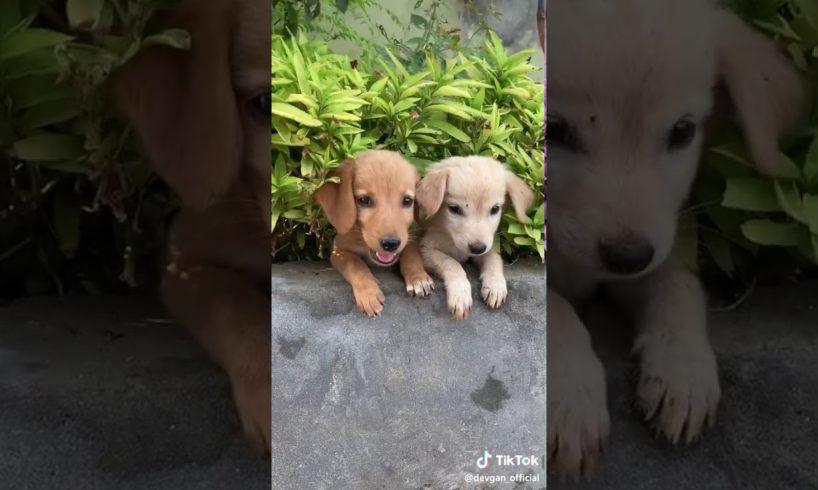 ,Cute cute  puppies
