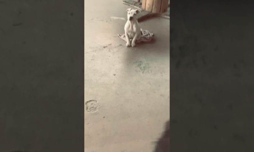 Cute puppies video♥️?