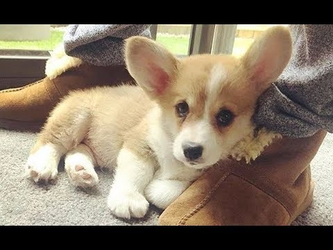 Cutest Puppies Breeds In The World - Cute And Funny Puppy Moments   Puppies TV