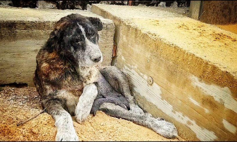 DRAMATIC RESCUE OF ABANDONED DOG LIVING AMONG TRASH !