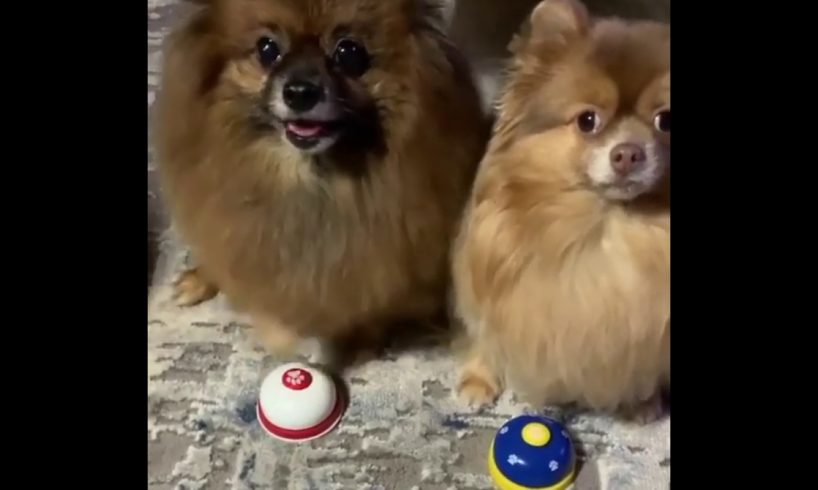 Dog Rings Bell - Cute Puppies - Funny Dogs