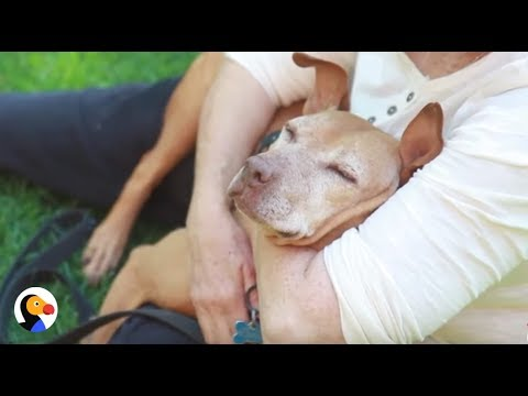 Dogs Rescued From Michael Vick Dog Fights Have REAL Families Now | The Dodo