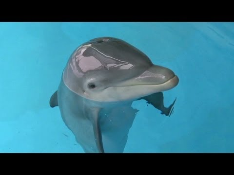 Dolphin reunited with family who rescued ailing animal