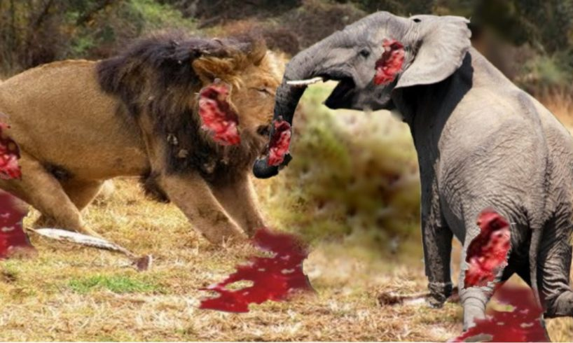 Elephant Vs Lions Attack Animal Fights Compilation 2016 - Lion vs Elephant Attack – Prin