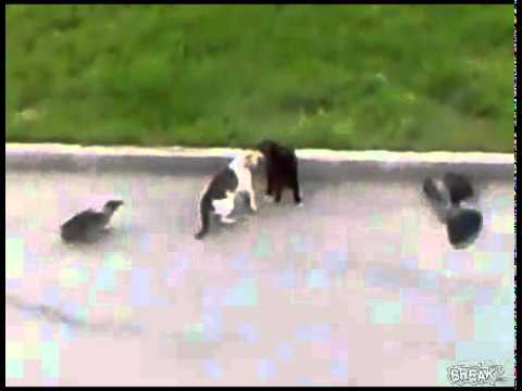 Epic Animal Fight