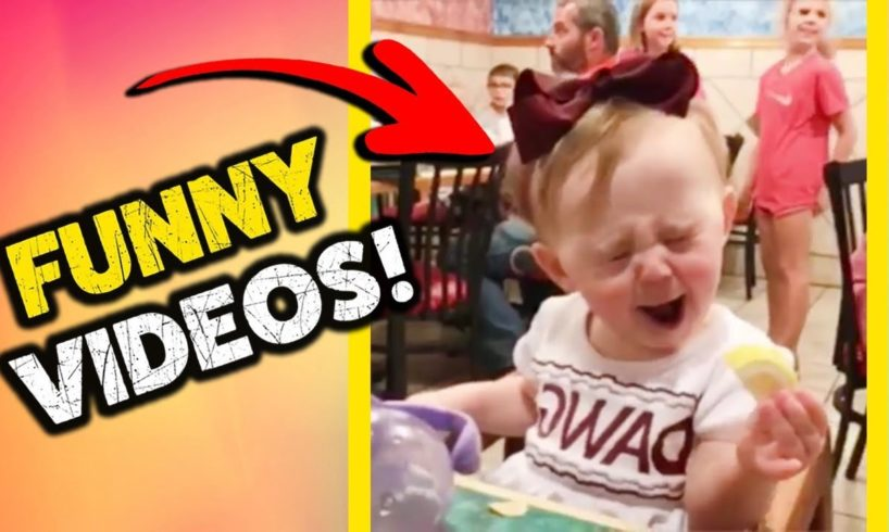 FUNNY VIDEOS!   Try Not To Laugh