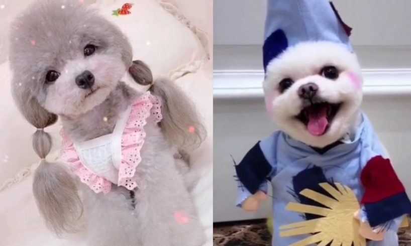 Funny Puppies And Cute Puppies Videos Compilation 2019 #1 - Cute Dogs