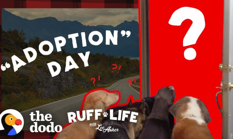 Guy With 9 Dogs Is So Tempted To Adopt 2 More   Ruff Life With Lee Asher