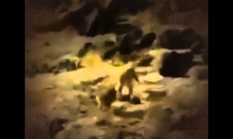 HAYVAN KAVGALARI   Animal fights
