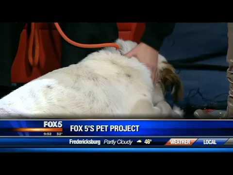 Homeless Animals Rescue Team (HART) on FOX 5 WTTG