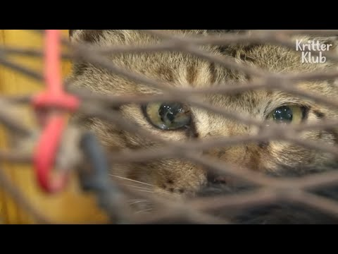 Hunted Stray Cats Drool In Fear Waiting For Their Turn To Be Boiled (Part 1) | Animal in Crisis EP87