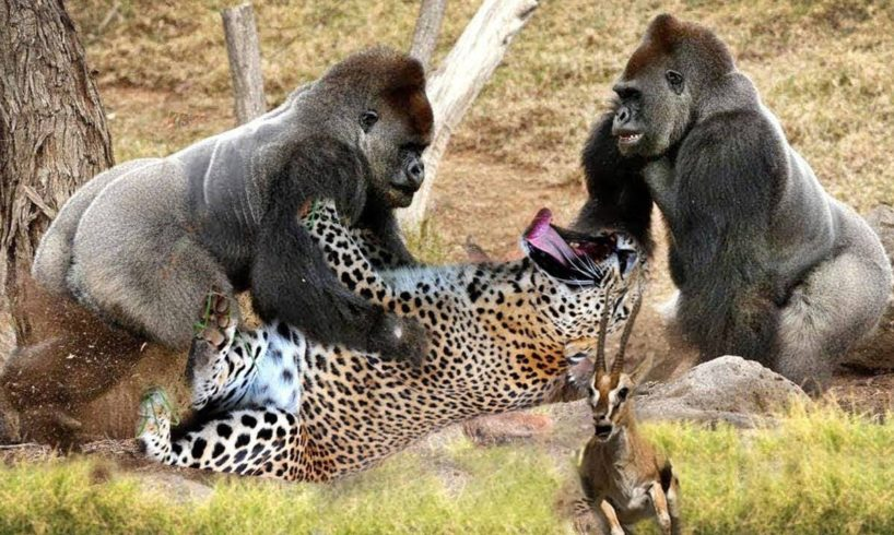 LIVE: Discovery Wild Animals Fights 2018 - Animal Documentary BBC - National Geographic Animals