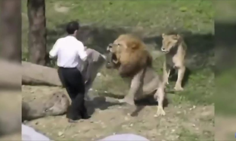 Lion Attacks Man! Caught On Camera! | Near Death Captured Gro Pro and Camera Part 17 (FailForceOne)