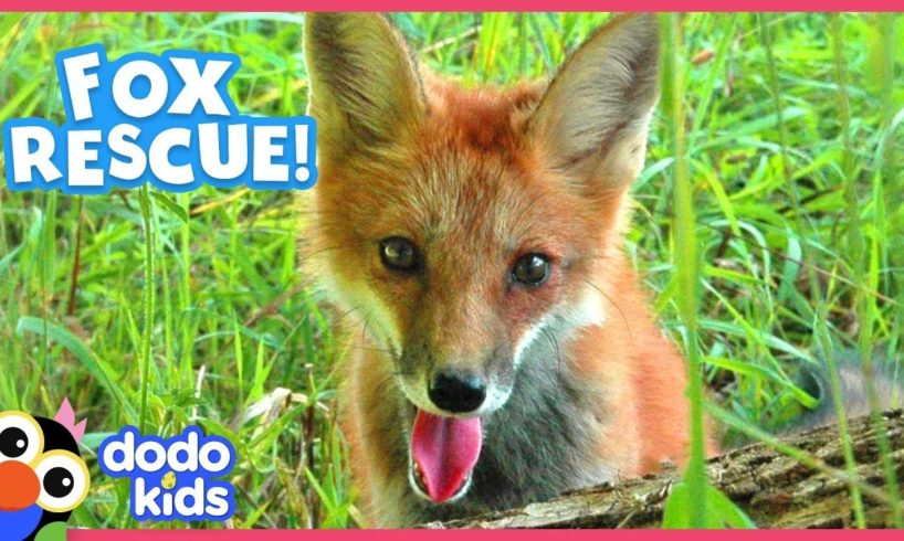 Little Fox Learns To Walk Again   Animal Videos For Kids   Dodo Kids: Rescued!